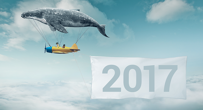 Whale Plane Carrying Banner 2017